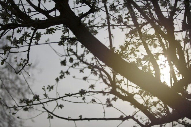 branches-625907_1920